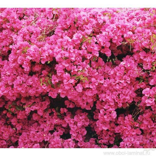 Як зробити стіну з квітів в саду, квартирі і на свято